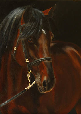 Wall Art - Painting - Bay Horse Study by Alison Stafford