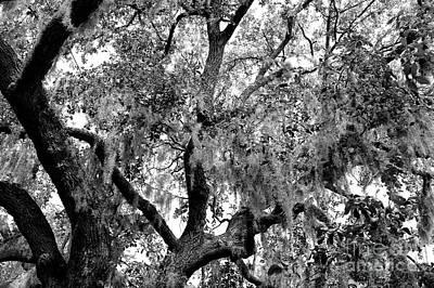 Photograph - Bay Street Spanish Moss by John Rizzuto