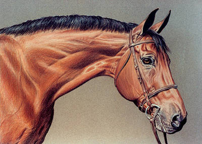 Bay Thoroughbred Original