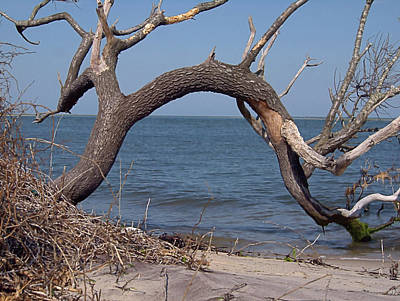 Photograph - Bay Tree West by Newwwman