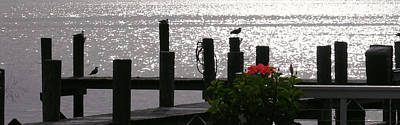 Photograph - Bay View Hibiscus by Steve Karol