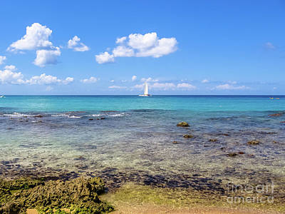 Photograph - Bayahibe Coral Reef by Benny Marty