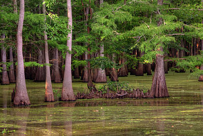 Photograph - Bayou At Dusk by Ester Rogers