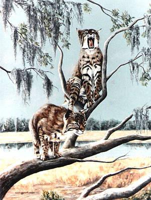 Bayou Bobcats Art Print