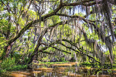 Photograph - Bayou Cathedral by Andy Crawford