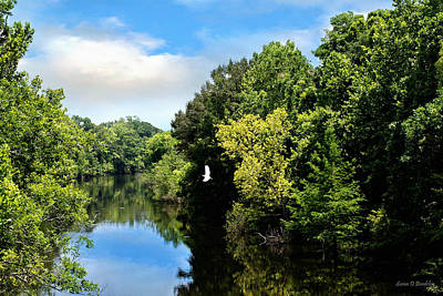 Louisiana Photograph - Bayou Des Glaises Louisiana by Susan Bordelon