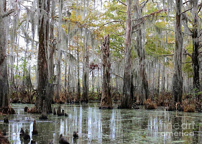 Photograph - Bayou Magic by Carol Groenen