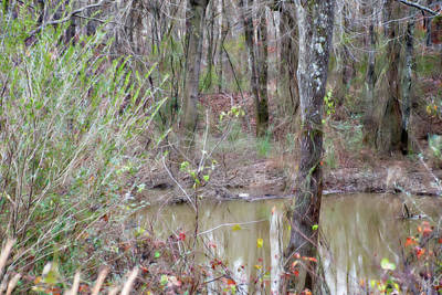 Photograph - Bayou Meto Scenery by Gina O'Brien