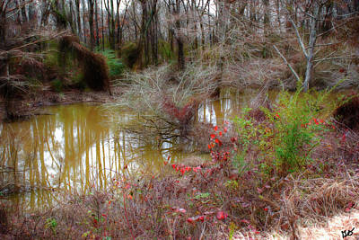 Photograph - Bayou Meto V by Gina O'Brien