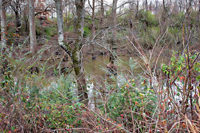 Photograph - Bayou Scenery Two by Gina O'Brien