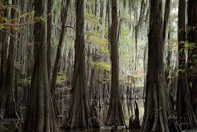 Bayou Trees Art Print