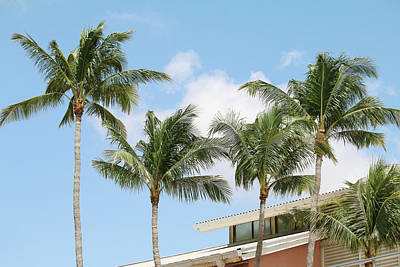 Photograph - Bayside - Miami Palms by Art Block Collections