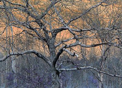 Bb's Tree 2 Art Print