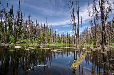 Photograph - Bc Forest Lake by Ryan Heffron