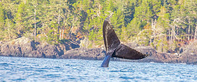 Photograph - Bc Tailing  by Kevin Dietrich