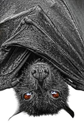 Be Afraid  Print by Yhun Suarez