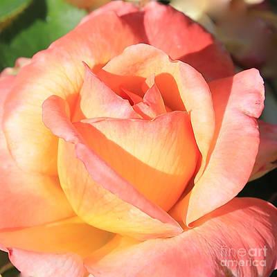 Roses Photograph - Joyful Rose by Carol Groenen