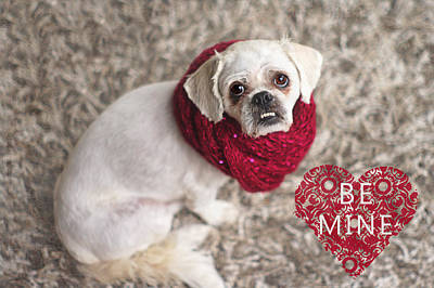 Photograph - Be Mine Pekingese by Suzanne Powers