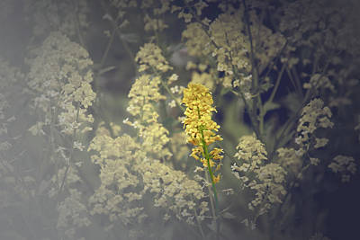In The Spotlight Photograph - Be Still And Capture The Beauty by Debbie Nobile