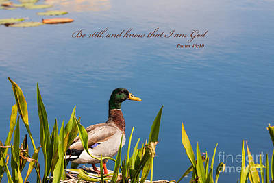 Photograph - Be Still by Diane Macdonald