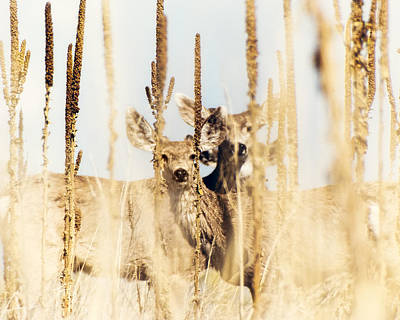 Colorado Wildlife Wall Art - Photograph - Be Still by Humboldt Street