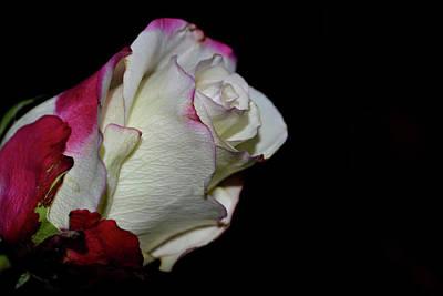 Photograph - Romance In Bloom by Nadalyn Larsen