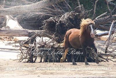 Photograph - Beach Babe by Captain Debbie Ritter