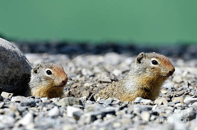 Photograph - Beach Baby Squirrels by Dee Cresswell