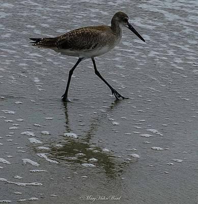 Photograph - Beach Bird by Mary Hahn Ward