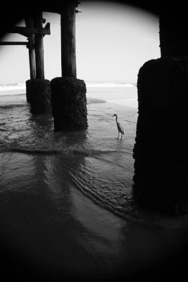 Photograph - Beach Bird by Mandy Shupp
