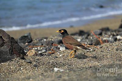 Photograph - Beach Bird by Mary Haber