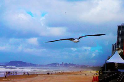 Photograph - Beach Bird by Susan Vineyard
