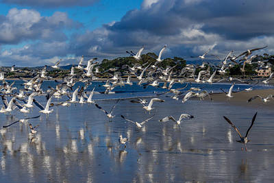 Photograph - Beach Birds by Derek Dean