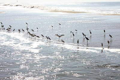 Photograph - Beach Birds, Cranes And Gulls by Gravityx9 Designs