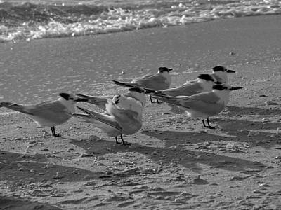 Photograph - Beach Birds by Juergen Roth