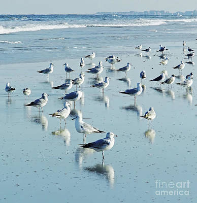 Photograph - Beach Birds Reflections by D Hackett