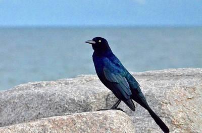 Walter Gantt Wall Art - Photograph - Beach Black Bird by Walter Gantt