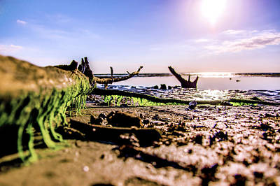 Water Photograph - Beach Branches by Michael Frizzell