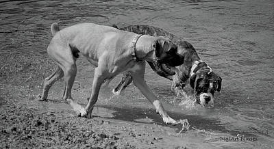 Boxer Digital Art - Beach Buddies by DigiArt Diaries by Vicky B Fuller