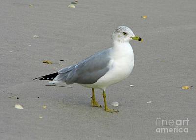 Photograph - Beach Buddy by D Hackett