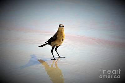 Photograph - Beach Bum by Brigitte Emme
