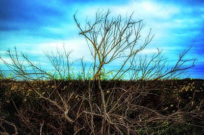 Photograph - Beach Bush Composition by Joseph Hollingsworth
