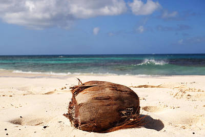 Digital Art - Beach Coconut In Anguilla On Shoal Beach In Shoal Bay by Toby McGuire