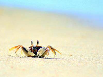 Lanta Photograph - Beach Crab by A Rey