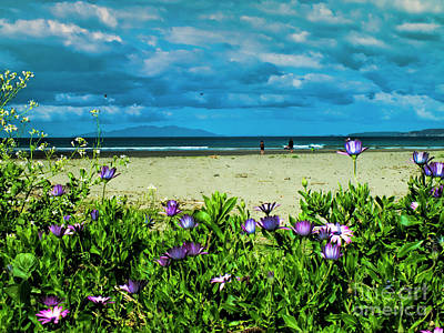 Photograph - Beach Daisies by Karen Lewis