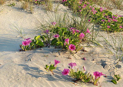 Photograph - Beach Decor by Gordon Beck