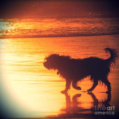 Beach Dog Art Print by Paul Topp