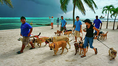 Photograph - Beach Dog Walkers On Ambergris Caye, Belize by Waterdancer
