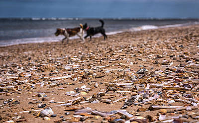 Photograph - Beach Dogs by Nick Bywater