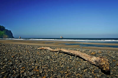Photograph - Beach Driftwood by Albert Seger